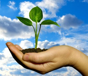 hand w plant for web