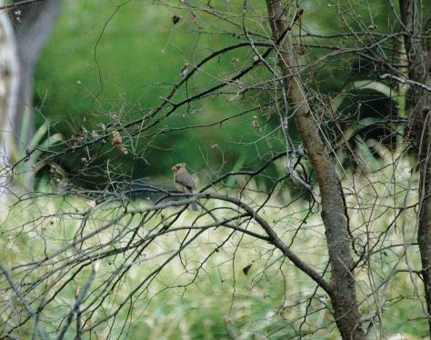 santos photo cardinal for web
